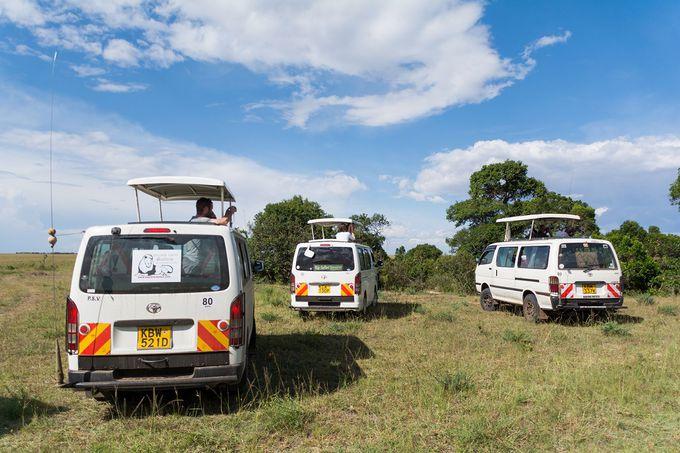 マサイマラ国立保護区って?