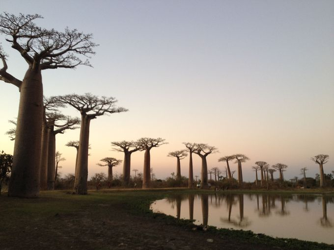 バオバブ並木道のモロンダバ