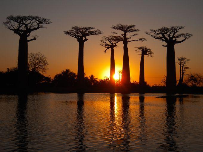 バオバブに沈む夕日