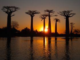 バオバブ並木や極上ビーチも!最後の楽園「マダガスカル」