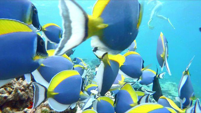 自慢のハウスリーフは天然の水族館!