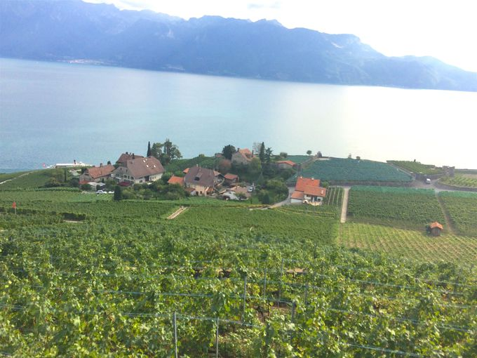 可愛らしいワイン生産農家でワインの試飲を
