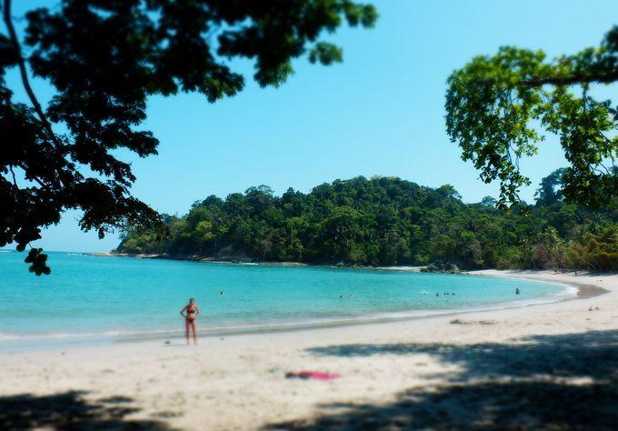 森林浴も楽しめるビーチ