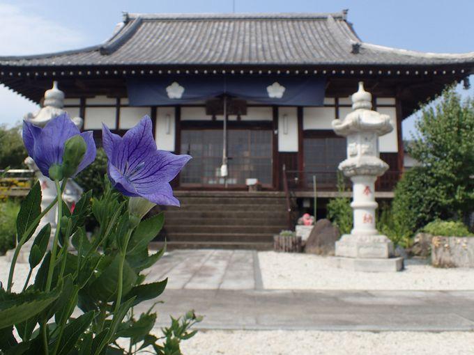 秋の七草とお寺を一度に楽しめる!