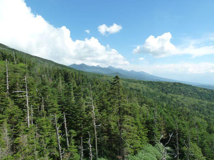 北八ヶ岳ロープウェイから眺めるアルプスの絶景!