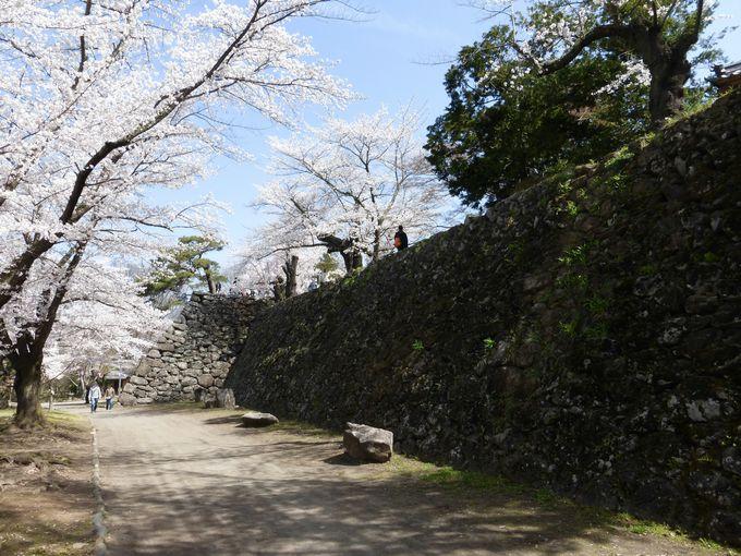 懐古園随一の桜模様を楽しめる絶景スポット!「懐古園」馬場