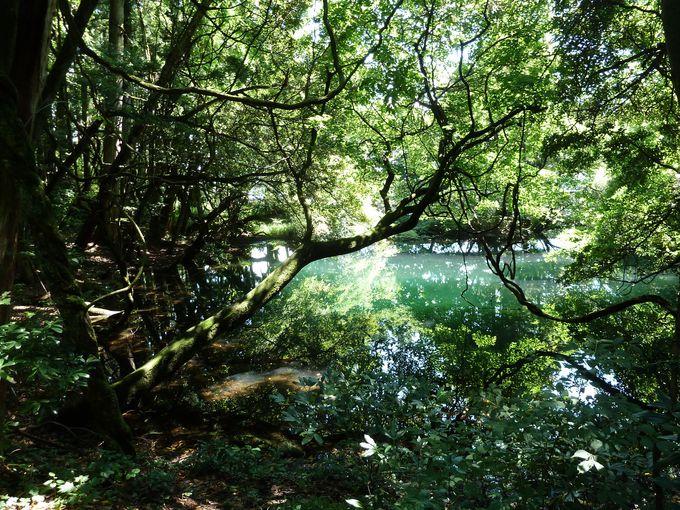 鳥海山の山麓に湧き出る神秘の泉!丸池様