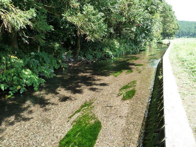 丸池様のすぐ近くを流れる牛渡川の清流もおススメ!