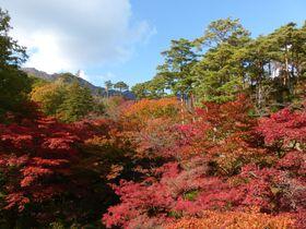 新潟の秋!弥彦公園もみじ谷で楽しむ紅葉の絶景|新潟県|トラベルjp<たびねす>