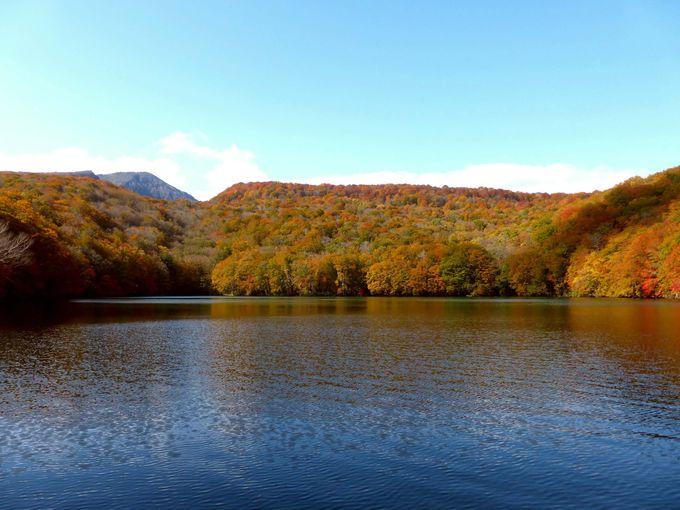 美しい紅葉散策を気軽に楽しめる!蔦沼(つたぬま)の紅葉