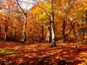 城ヶ倉大橋に蔦沼の紅葉も!青森・八甲田山で絶景紅葉狩りドライブに出掛けよう