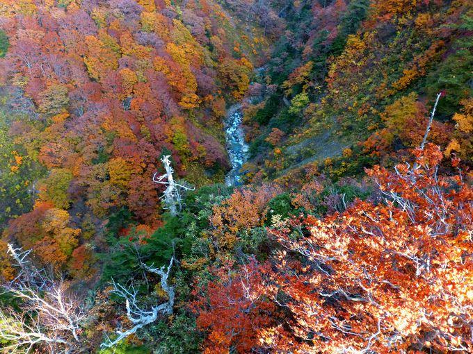 青森が誇る紅葉の絶景と言えばココ!城ヶ倉大橋の紅葉