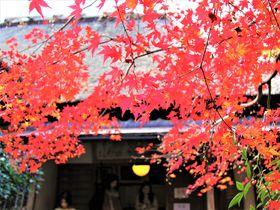 京都・嵐山〜嵯峨野散策コース!おすすめ観光スポット巡り