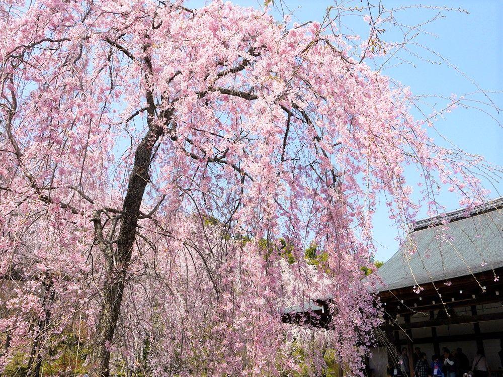 京都「嵐山〜嵯峨野」散策コース!おすすめ観光スポット巡り
