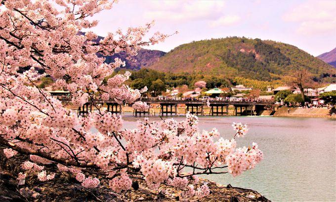 渡月橋と桜のコラボが美しい!京都随一の観光名所「嵐山」