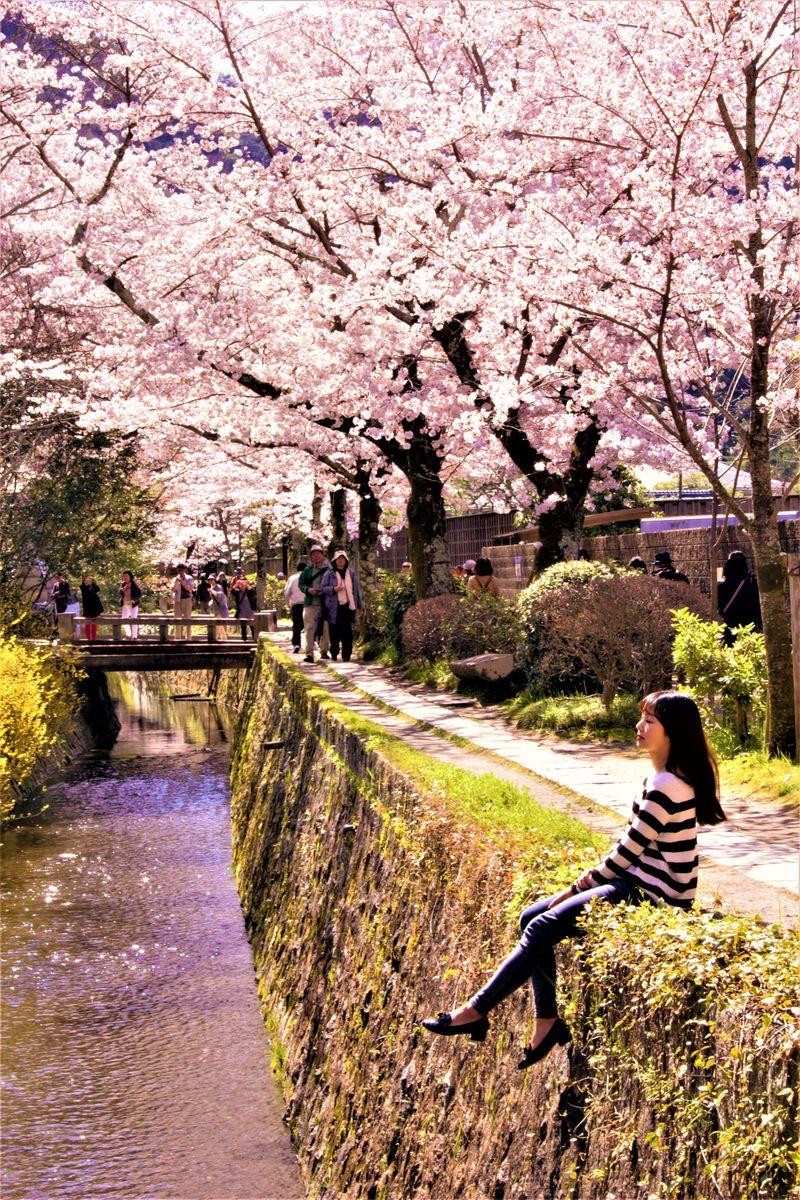 外国人観光客にも人気!「京都」の名桜5選〜定番から意外な穴場まで