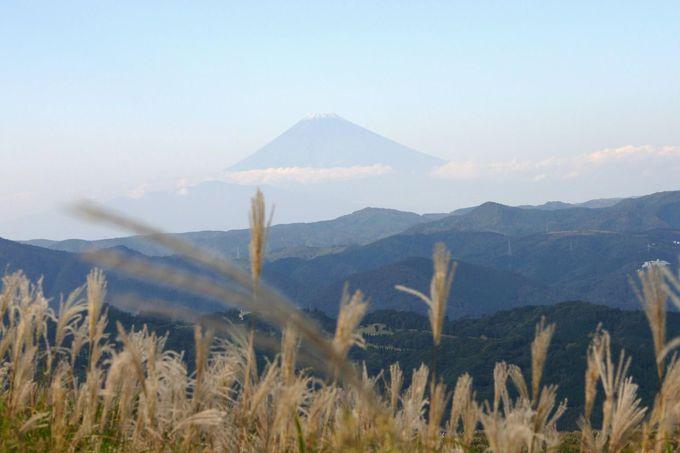 ススキの銀穂の彼方に見える富士山