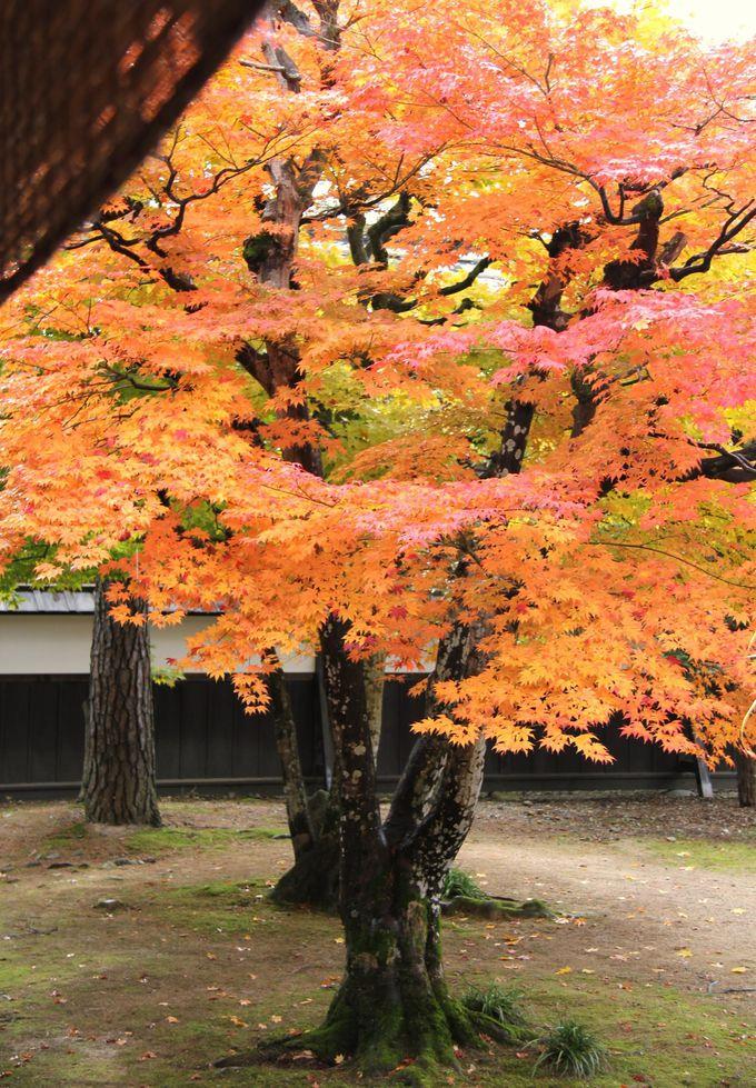 紅葉が見事な高山陣屋の和風庭園