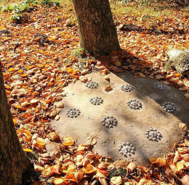 明るい秋の日だまりに抱かれて☆神戸・六甲山を散策しよう!「六甲高山植物園」