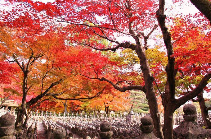 石仏を覆い尽くす紅葉に命のはかなさを想う【化野念仏寺】