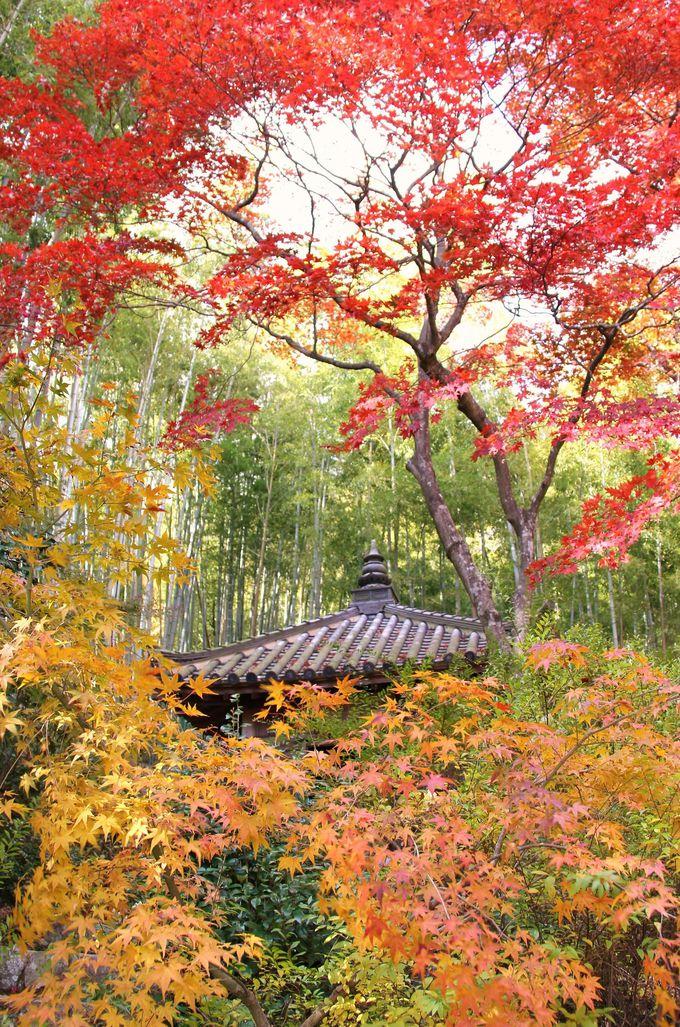 竹林の青さと紅葉のコントラストが美しい「直指庵」