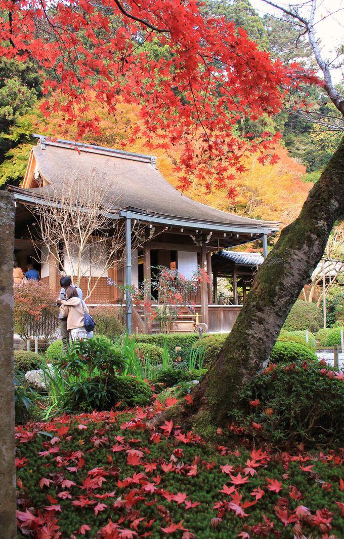 苔庭に落ちた紅葉が美しい天台宗の尼寺【寂光院】