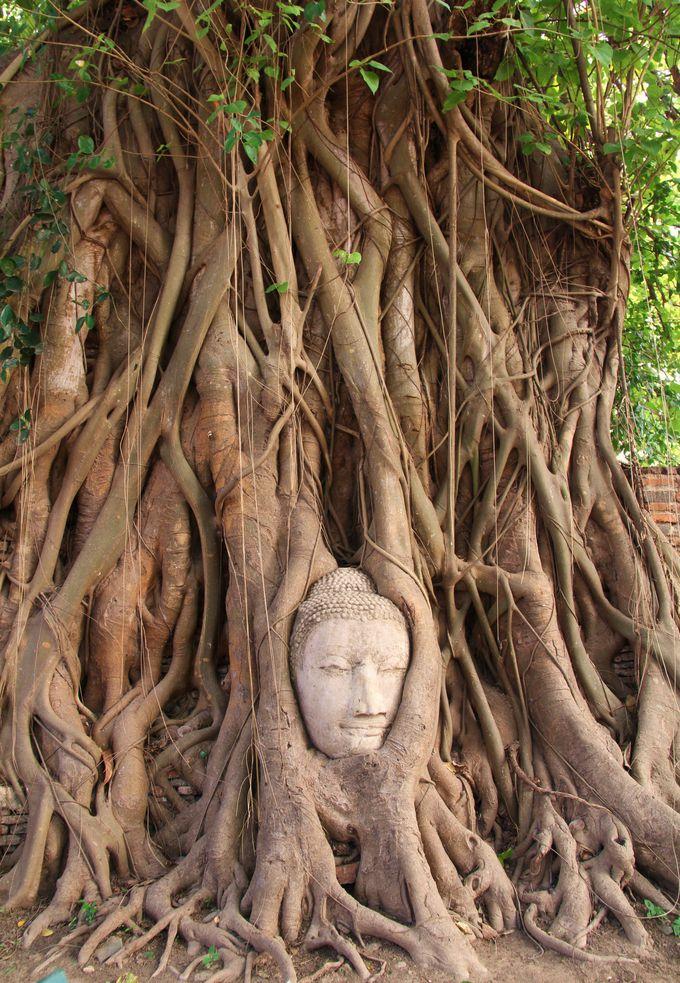 樹の根っこが絡みあう仏頭『ワット・マハータート』