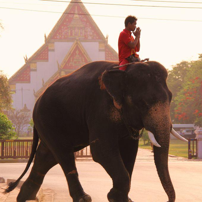 アユタヤ観光のドキドキ体験!ゾウに乗ってみよう!