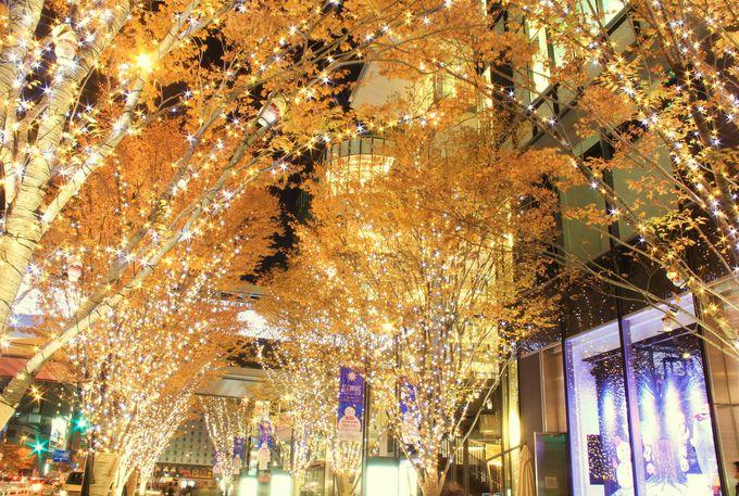 ケヤキ並木を彩る豪華なイルミネーション。今年は��アナ雪�≠フツリーも!