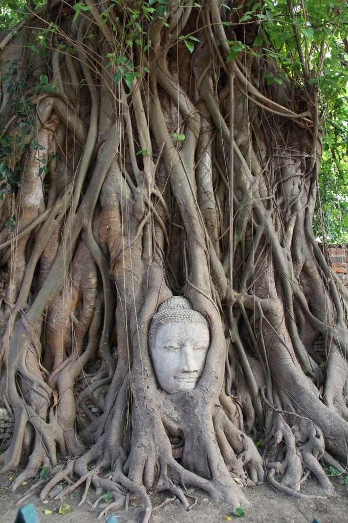 木の根が絡んだ仏頭。優しい永遠の微笑が印象的