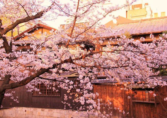 祇園のライトアップ、2016年は3月26日〜4月4日まで