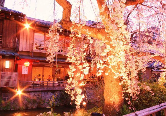 耽美な光に包まれる枝垂れ桜