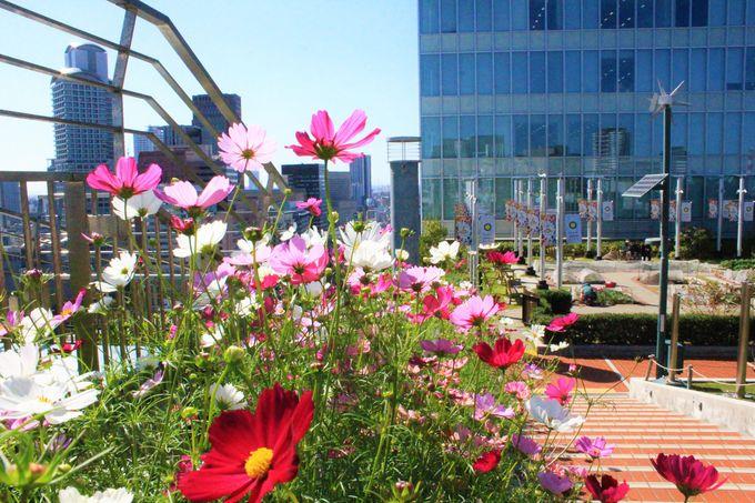 季節の花々も美しい!ノースゲートビルディングの「天空農園」