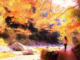 京都紅葉ハイキングのおすすめ!清滝~三尾の清流を楽しむ旅|京都府|トラベルjp<たびねす>