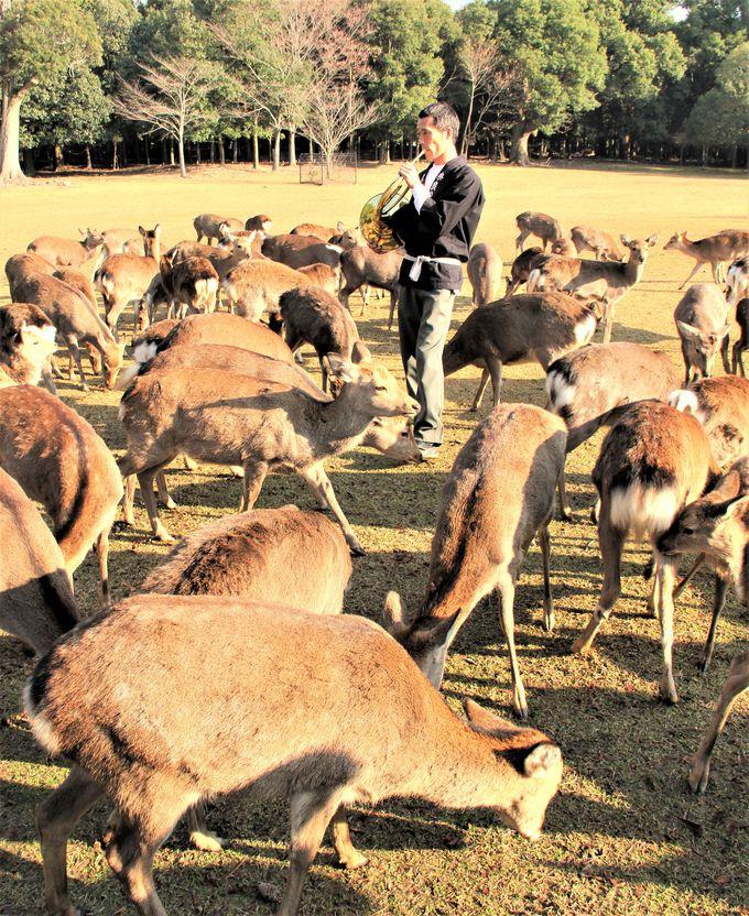 たちまち、鹿、鹿、鹿!魔法のホルンは本物か!