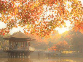関西屈指の紅葉の穴場!奈良公園の紅葉巡りおすすめスポット5選|奈良県|トラベルjp<たびねす>
