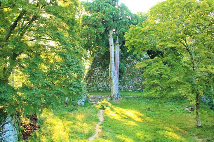 美しい石垣!高取城の「二の丸」「本丸」はラピュタの神殿