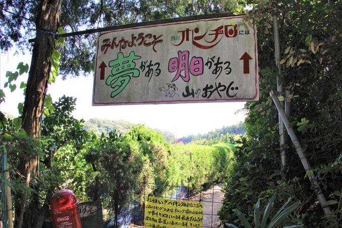 南大阪のUSJ!謎の観光スポット「城山オレンヂ園」への行き方、アクセス