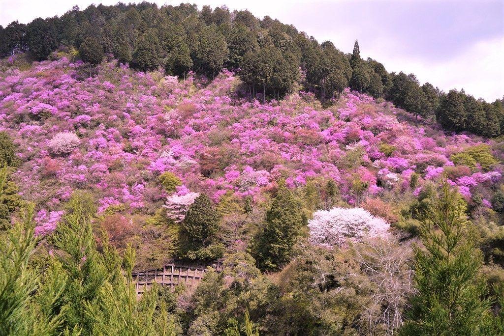 桜やツツジ、紅葉の名所!倍返りお守り」も人気の「西明寺」(槇尾)
