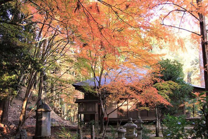 紅葉も美しい世界遺産!京都の侘・寂(わび・さび)を体感!「高山寺」(栂尾)