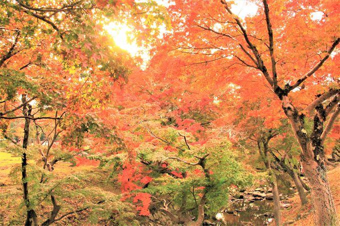 東大寺に近い紅葉穴場!味わい深い古都の秋!「奈良春日野国際フォーラム 甍〜I・RA・KA〜」
