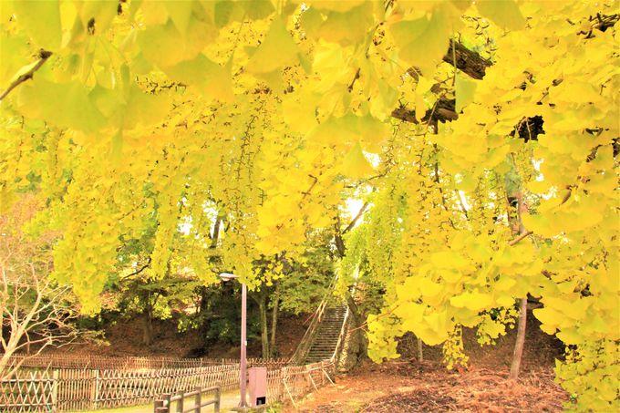 奈良公園の紅葉時期・見ごろ11月中旬〜12月上旬!東大寺エリアの紅葉穴場スポット「大仏池」「大湯屋」