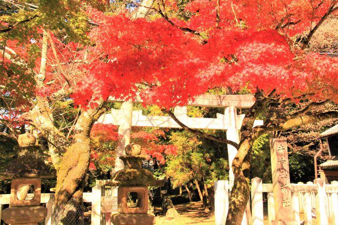 奈良公園でおすすめ!紅葉の穴場!東大寺の守護神社「手向山八幡宮」