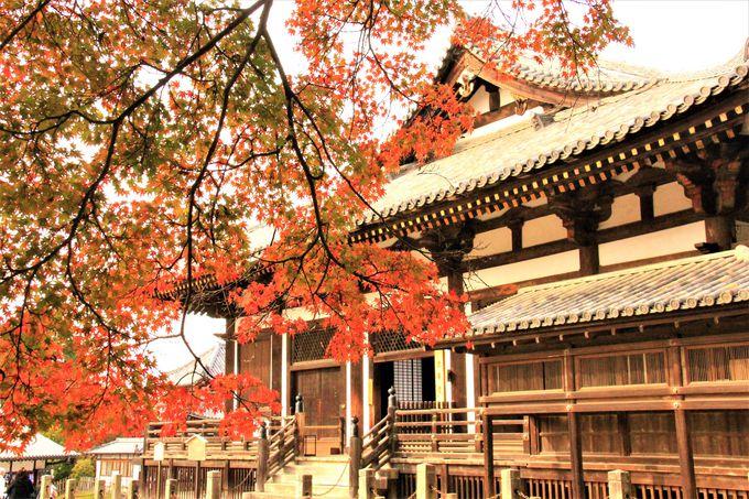 秋の奈良で爽やかハイキング!「若草山」「法華堂(三月堂)」「浮見堂」もおすすめの紅葉穴場スポット