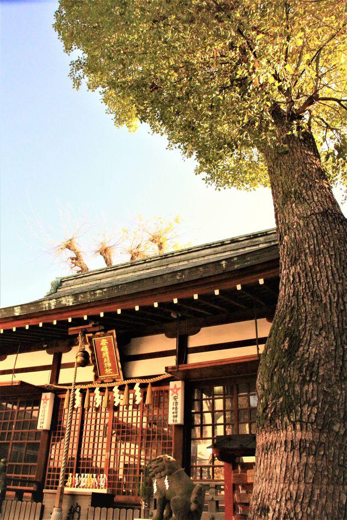陰陽師・安倍晴明の生誕の地「安倍晴明神社」 五芒星ペンダントのお守り