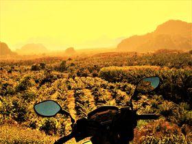 世界最古のジャングルを駆け巡る!プーケットからカオソックへ男ひとりバイク旅