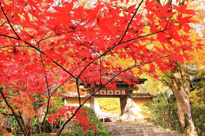 深い緑色の苔庭と色鮮やかな紅葉。建礼門院が暮らした「寂光院」