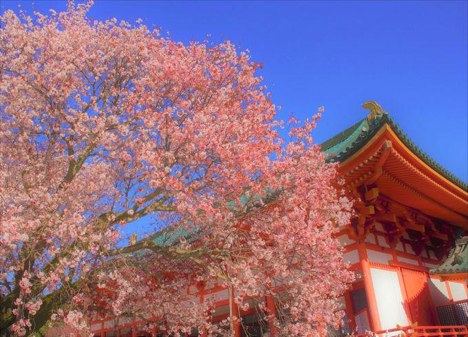 京都・東山エリアで有名な桜スポット「祇園白川」「平安神宮」「南禅寺」