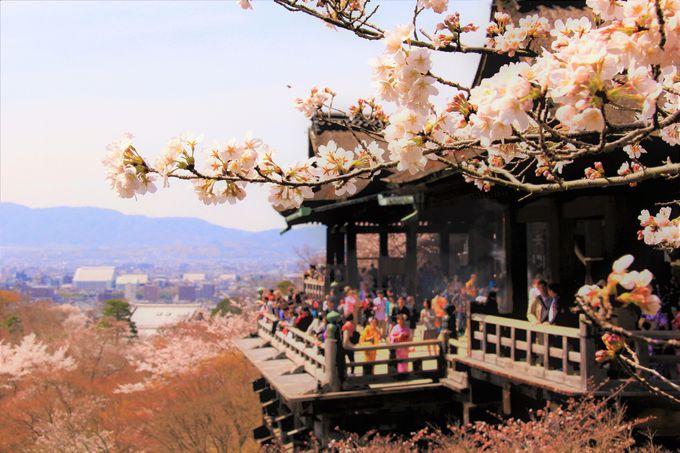 京都・超有名!おすすめの桜スポット「嵐山」「哲学の道」「清水寺」