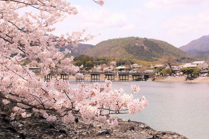 京都の桜で外せない定番の観光スポット!「東寺」「嵐山・渡月橋」「哲学の道」